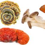 Alla scoperta dei funghi medicinali